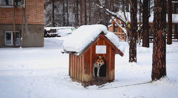 Varázslatos kutyaházat vásárolhat a saját ebének.